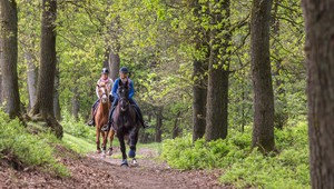 Horse riding in the natural surroundings